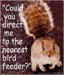Squirrel Bird
