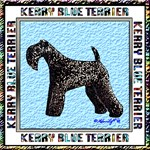 Kerry Blue Champion