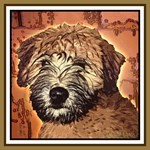 WHEATEN TERRIER: WET PUPPY (BROWN)