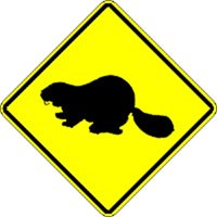 Beaver Xing
