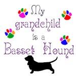 Grandchild is a Basset Hound