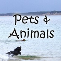 Dog owners, cat lovers, pet shirts