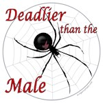 Deadlier than the male, spider
