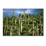 Arizona Scenic Postcards