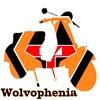 WOLVOPHENIA