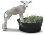 Lamb in a Tub