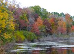 Fall Colors - Pond