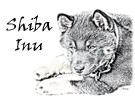 Shiba Inu Colored Sketch