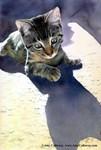 Feline Fascination