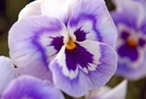 Flowers & Plant Life