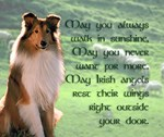 Irish Blessing Sheltie