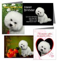 Bichon Greeting Card