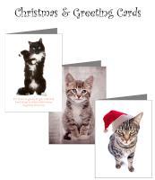 Christmas & Greeting Cards