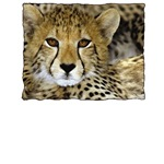 Cheetah Face T-Shirts and Gifts
