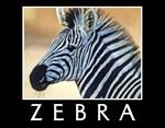Zebra Calendars