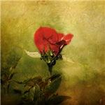 Miniature Red Rose I