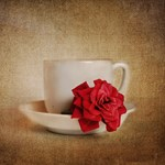 Miniature Red Rose IV