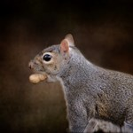 The Nut Collector