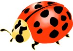 Ladybug T-shirts