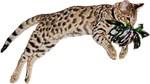 Feline Fortuity