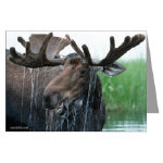 Moose Note Cards, Prints, and Posters