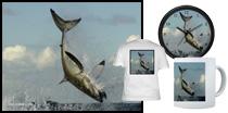 Cartwheeling Great White Shark