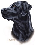 Labrador Retriever (black)