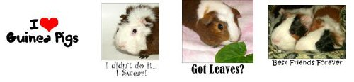 Guinea Pig Fun: T-Shirts, Mugs, and Other Stuff