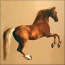 Palomino Stallion. Horse art gifts & clothes