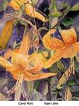 Tiger Lilies, Carol Hart