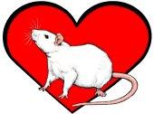 <b>Rat Heart</b>