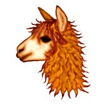 Awesome Alpaca T-shirts + Gifts