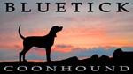 Bluetick Coonhound Sunset