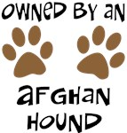 Owned By An Afghan Hound