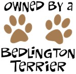 Owned By A Bedlington Terrier