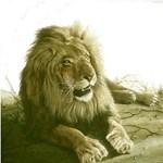 Lions, Lion Shirts, Tees
