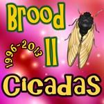 Cicada Brood II Pink