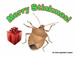 Stinky Christmas Bug