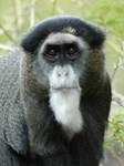 Monkey Products