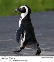 Penguin x-ing