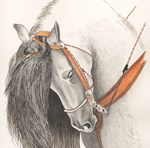 HORSES - 'THE ANDALUSIAN'