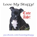 Staffy Clothing for Humans