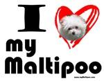 I Love my Maltipoo