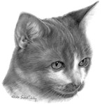 Orange & White Short-Haired Cat