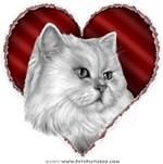 Persian Cat Valentine