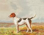 Vintage Art Dog Breeds