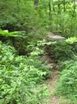 Tennessee Hiking Trail