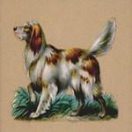 Springer Spaniel Raphael Tuck & Son 1880