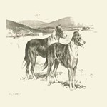 Smooth Collies 1890 Digitally Remastered
