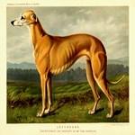 Greyhound 1880 Digitally Remastered